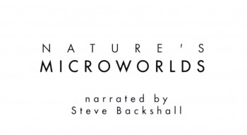 BBC Микромиры / Nature's Microworlds