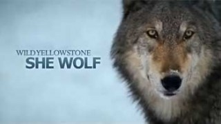 Дикий Йеллоустоун: Волчица / Wild Yellowstone: She Wolf (2014)