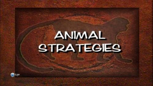 Стратегии животных 2 серия. Выбор оружия / Animal Strategies (2004)