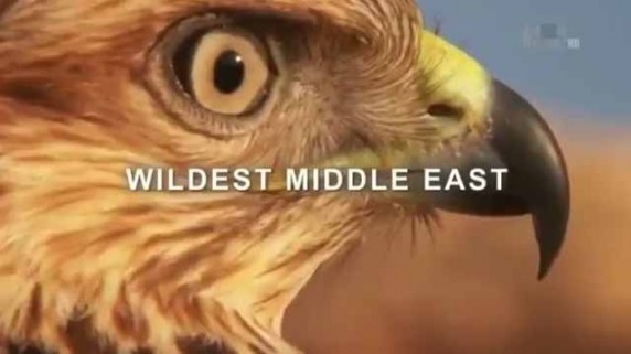 Animal Planet  Wildest Middle East  Setiap Selasa 2000 WIB