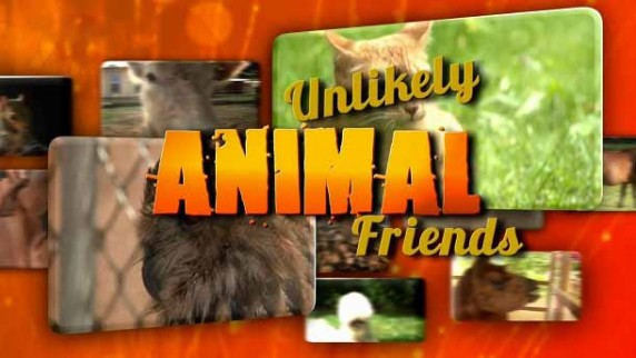 Странная дружба 3 сезон 6 серия. Щенок и попугай / Unlikely Animal Friends (2016)