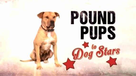 Дорога из приюта 2 сезон 2 серия / Pound pups to Dog stars (2015)