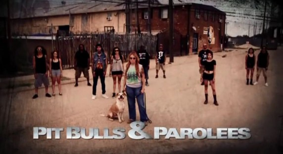 На свободу с питбулем 7 сезон 8 серия. В первый раз / Pit Bulls and Parolees (2016)